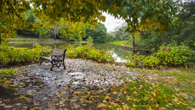 Benches in park. Park bench in Autumn with fallen leaves Stock Photography