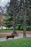 Benches in the park Royalty Free Stock Photos
