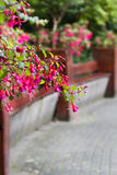 Benches in park with fuchsia Stock Images