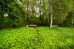 Benches in the park. Landscape is with benches in the park Stock Photography