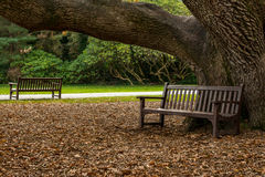 Benches in the park. Benches near Muckross House garden,Killarney National Park,Ireland Royalty Free Stock Photos