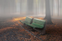 Benches in park. A peaceful place for rest in zemun park Royalty Free Stock Photography
