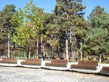 Benches in park. Row of wooden benches in park in autumn Royalty Free Stock Photography