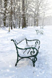 Benches in the park. Winter landscape Royalty Free Stock Photos