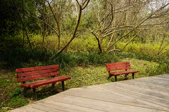Benches by planked footway in sunny spring Royalty Free Stock Photography