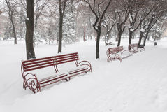 Benches in snow Stock Image