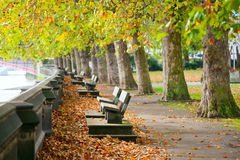 Benches on Thames Embankment Stock Photo