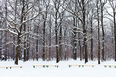 Benches and trees under snow in city park Royalty Free Stock Photos