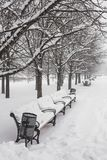 Benches in the winter city park Royalty Free Stock Image