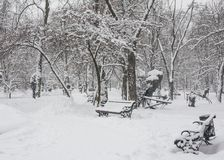 Benches in the winter city park Royalty Free Stock Photos