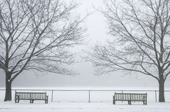 Benches in Winter Fog. Two benches and two trees in the winter with the fog Royalty Free Stock Images