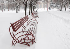 Benches in winter park Royalty Free Stock Photos