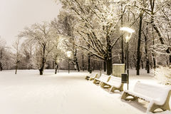 Snow-covered trees and benches in the city park at night Stock Images