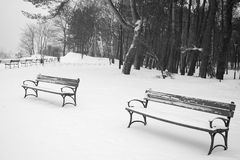 Benches in the winter scenery. royalty free stock image