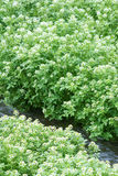 Benchland植物 免版税库存图片