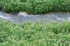 Benchland植物 库存照片