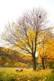 Benchs和树在秋天 免版税库存图片