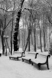 Benchs en nieve Fotos de archivo