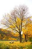 Benchs and trees in autumn Royalty Free Stock Image