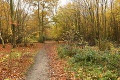 Bencroft森林在秋天在赫特福德郡,英国 免版税库存照片