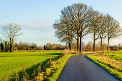 Bend country road with tall leafless trees royalty free stock images