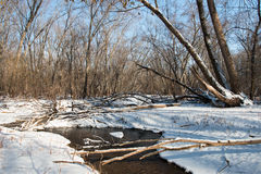 Bend of a creek in winter forest. Afton State Park, Minnesota Royalty Free Stock Image