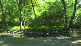 Bend of the river flowing in the forest. Sunny day stock footage