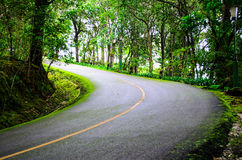 Bend In The Road. A bend in a country forest road Stock Photography