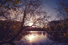 Bend Yellow Tree on Calm Body of Water during Golden Hour Royalty Free Stock Photos