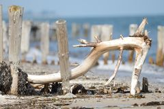 Bended branch at beach Royalty Free Stock Images