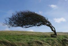 Bended drzewo Zdjęcia Stock