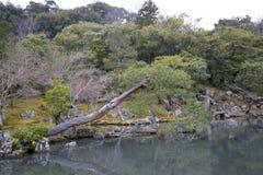 Bended drzewo Obraz Stock