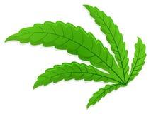 Bended marijuana leaf. Bended fresh green marijuana leaf vector art Royalty Free Stock Image