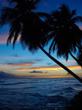Bended Palm trees with a beautiful sunset. Caribbean Sunset with Palm trees Royalty Free Stock Photography