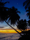 Bended Palm trees with a beautiful sunset with the moon. Caribbean Sunset with Palm trees and the moon, soft waves,bright colors Royalty Free Stock Image