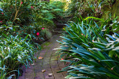 Bended path in tropical garden Royalty Free Stock Image