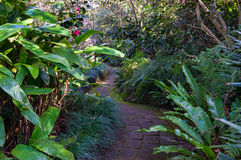Bended path in a tropical garden Royalty Free Stock Image