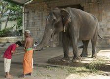 Bendición del elefante en el templo de Mahalingeswarar Imagen de archivo libre de regalías