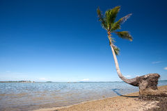 Bending coconut tree by a tropical beach Stock Photography