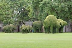 Bending elephant trees Stock Photography