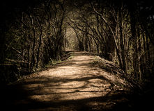 A Bending Forest Path royalty free stock photos