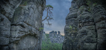 Bastei Tree bent on rocks. Tree growing out of face of rock Royalty Free Stock Photos