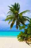 Bending palm tree on tropical beach Stock Image