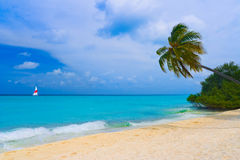 Bending palm tree on tropical beach. Vacation background Royalty Free Stock Photography