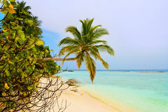 Bending palm tree on tropical beach. Vacation background Royalty Free Stock Image