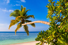 Bending palm tree on tropical beach. Vacation background Stock Photos