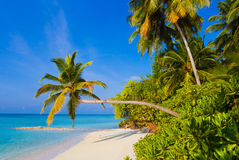 Bending palm tree on tropical beach Stock Images