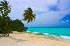 Bending palm tree on tropical beach. Vacation background Royalty Free Stock Images