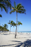 Bending Palms. Palm trees on a white sandy beach bending to form an W Royalty Free Stock Photos