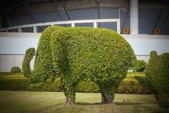 The Bending tree of elephant bonsai Stock Image